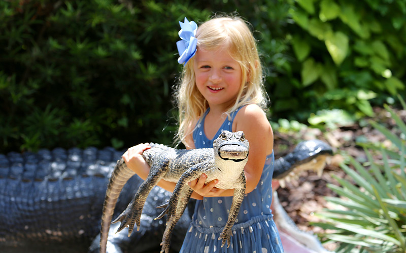 Image result for girl with alligator